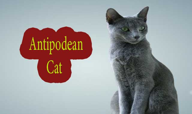 Antipodean cat