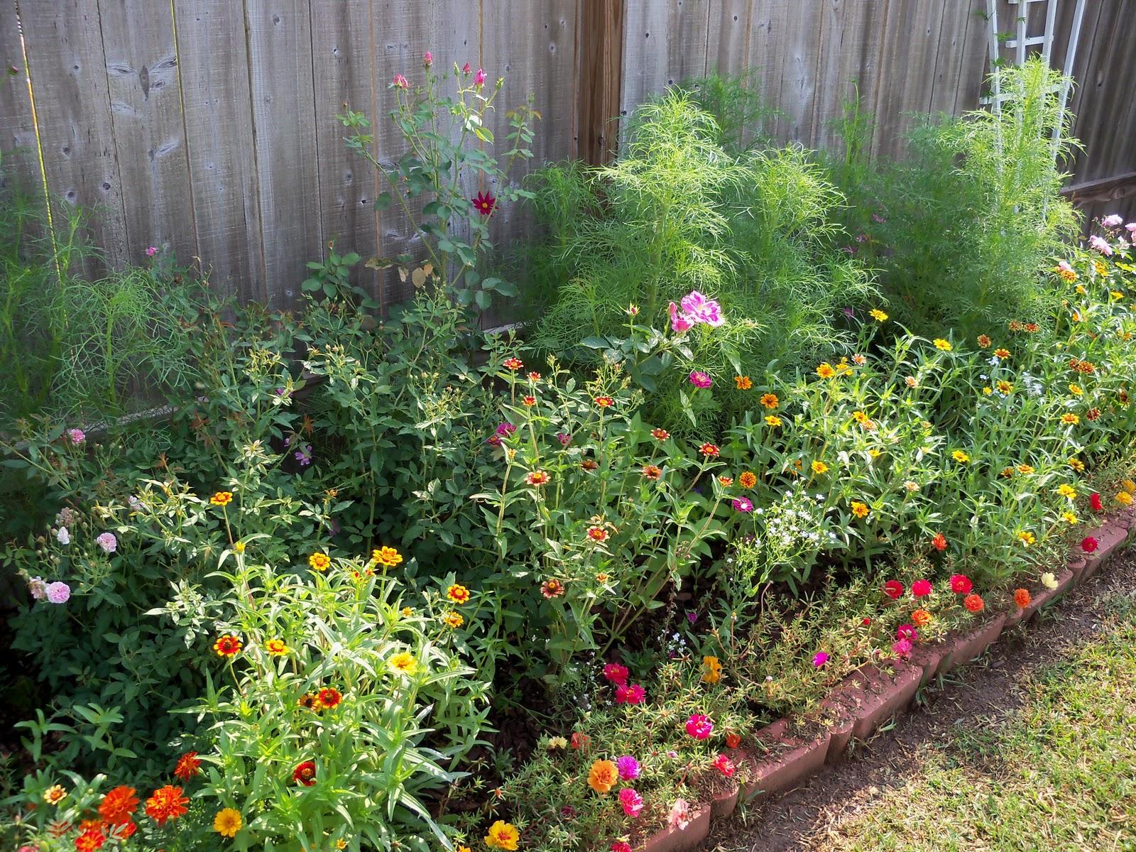 Gardening 2010, Part Two - 101_3300.JPG