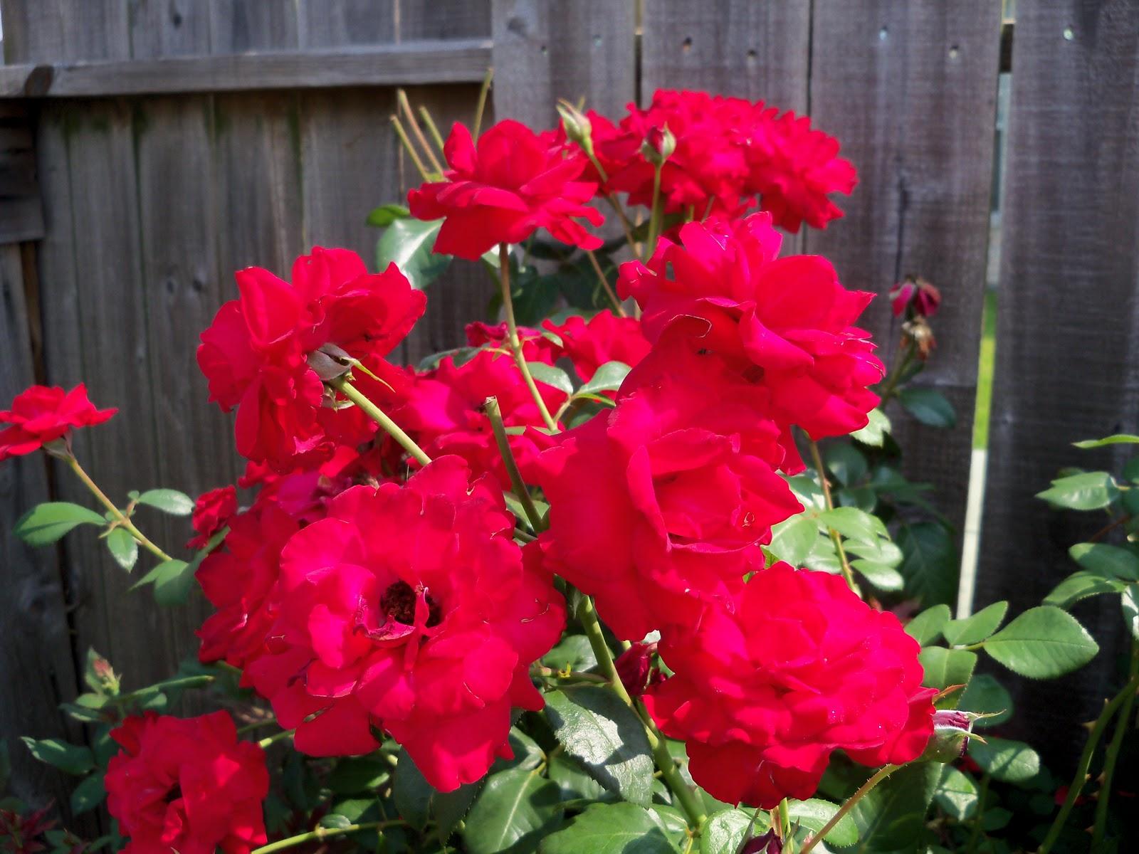 Gardening 2010, Part Two - 101_3404.JPG