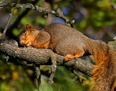 funny animal sleeping