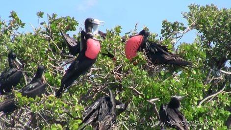 Santuario delle Fregate - Barbuda
