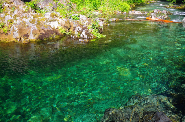 Opal Creek to Cedar Flats 6/27 - Oregon Hikers