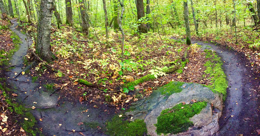 Cleared singletrack, September 1st. Many leaves falling since clearing.