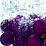 Sistema P Vid's profile photo