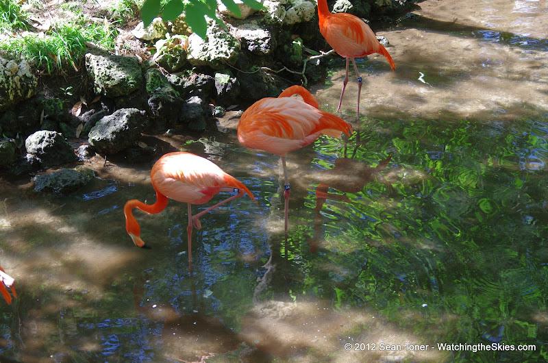 04-07-12 Homosassa Springs State Park - IMGP0048.JPG