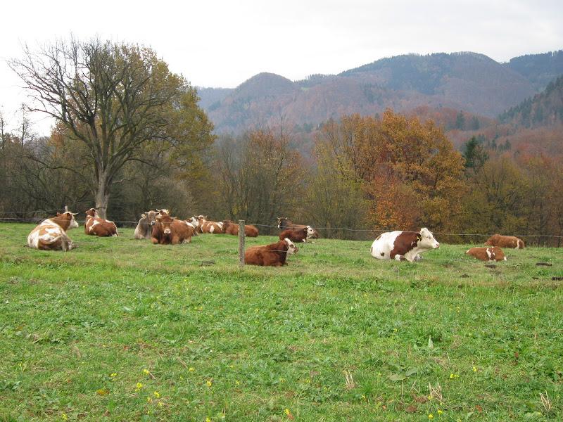 Kmetija - IMG_1414.jpg