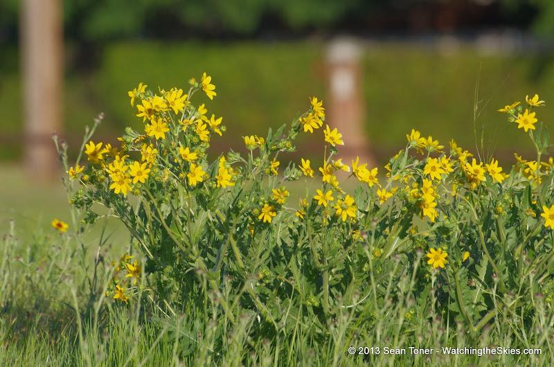 2013 Spring Flora & Fauna - IMGP6493.JPG