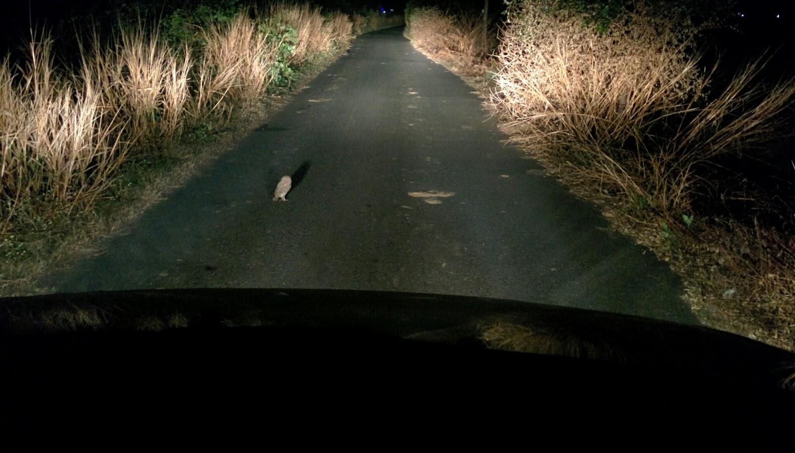 Crazy owl blocking my path.