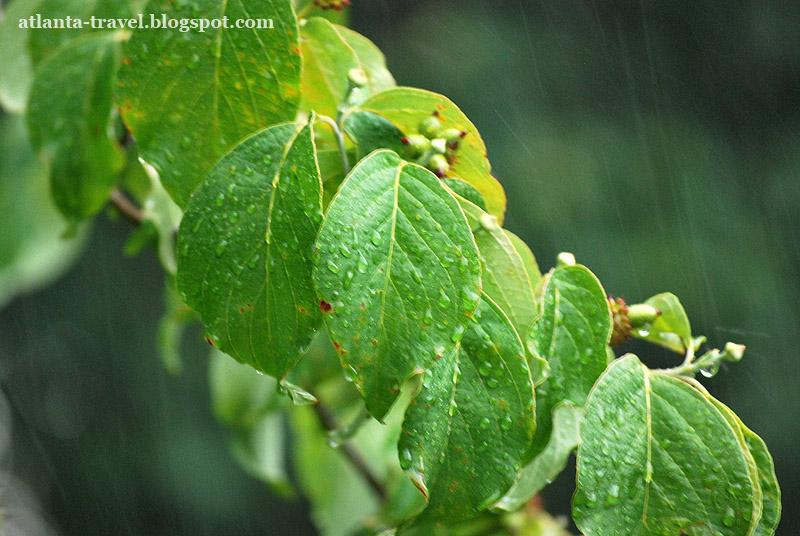 Дождь в Атланте - Rain in Atlanta