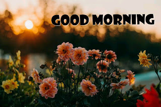 Download free good morning images