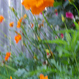 Gardening 2012 - 115_2413.JPG