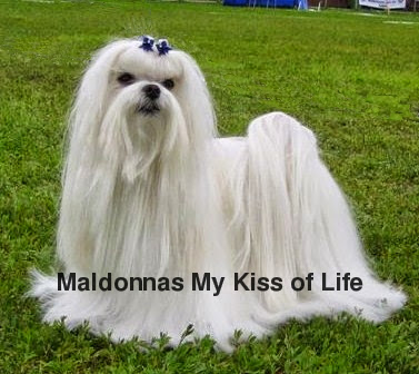 Maldonnas My Kiss of Life