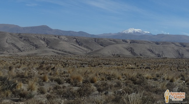 Vicuñas Volcanes Arequipa Chivay Perú 1
