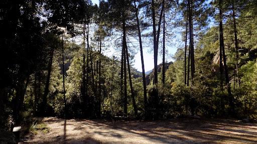 Peu avant l'arrivée au parking de l'Auberge de la Forêt