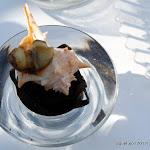 QiqueDacosta_SaborMediterraneo_Quelujo2012-039.JPG