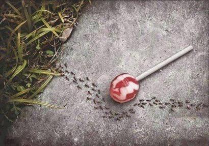 lolli_ants_aspartame