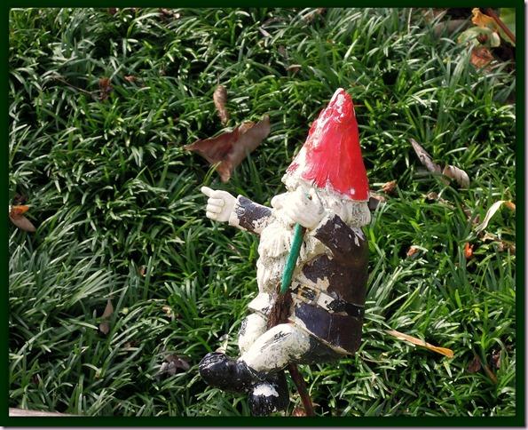 gnomeDSCN0995