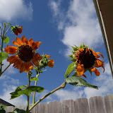 Gardening 2011 - 101_0008.JPG