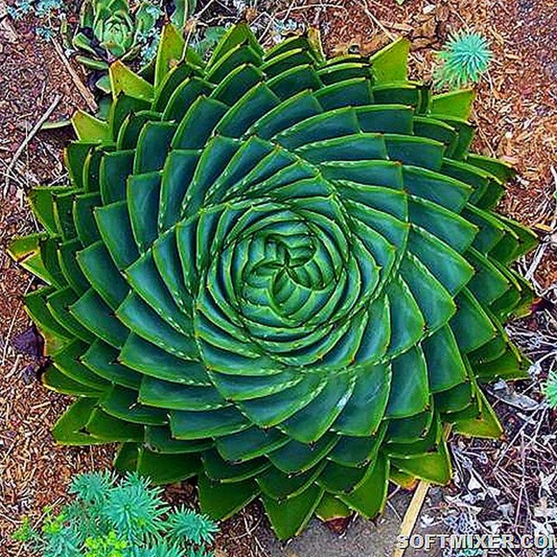 Растения завораживающие взгляд