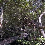 Caminos entre el manglar