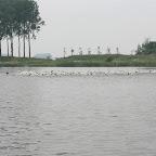 Sente 2008 site (12).JPG