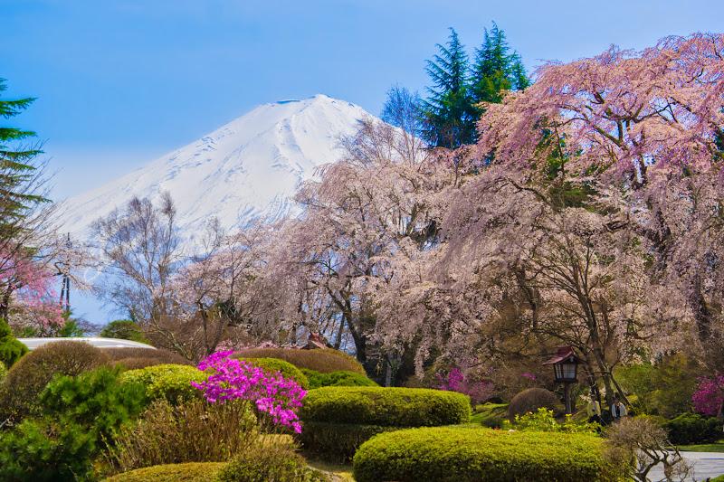 富士ビューホテル 桜 写真19