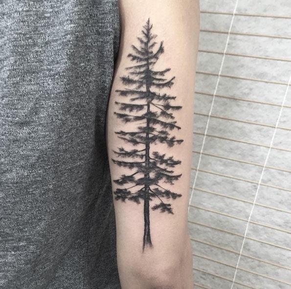este_pinheiro