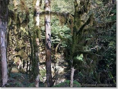 Лес к районе каньона Псахо