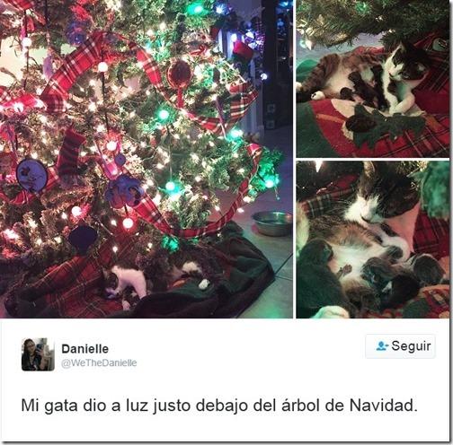 humor twits de gatos (1)