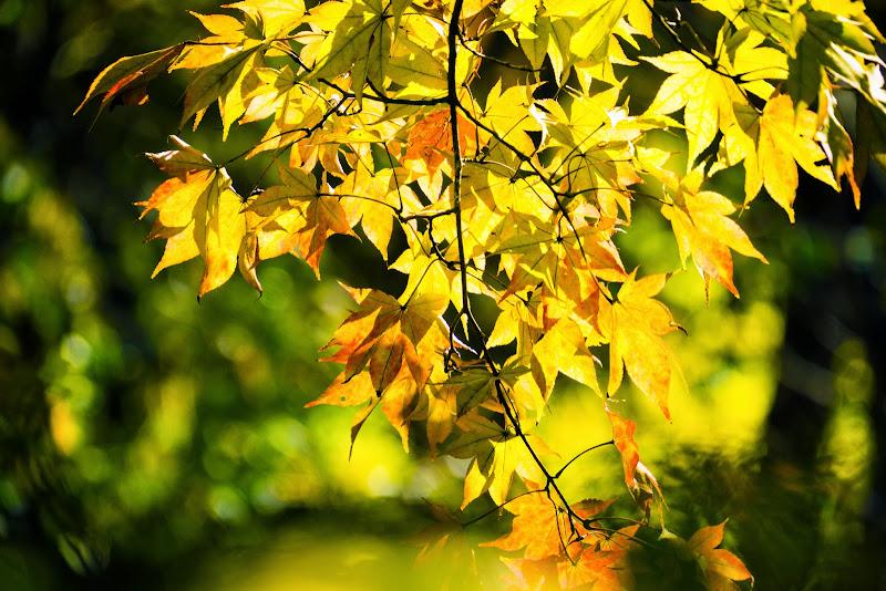 昭和記念公園 日本庭園 紅葉 写真1