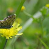 Polyommatus icarus (ROTTEMBURG, 1775), mâle. Les Hautes-Lisières (Rouvres, 28), 17 juin 2012. Photo : J.-M. Gayman