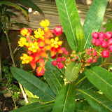 Gardening 2015 - 116_7662.JPG