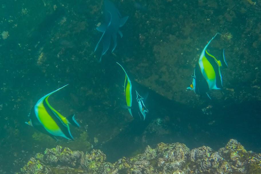 galapagos - Galapagos_FB_2-46.jpg