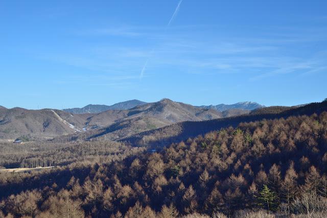 冬木立 八ヶ岳