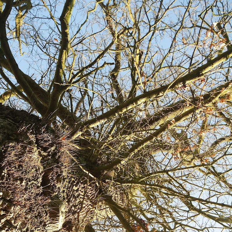Stowe_Trees_15.JPG
