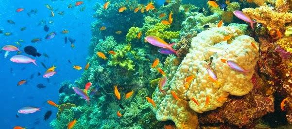 Grande Barreira de Coral - Queensland