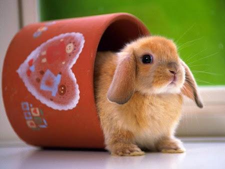 Những con thỏ cực kỳ kute và dễ thương lắm