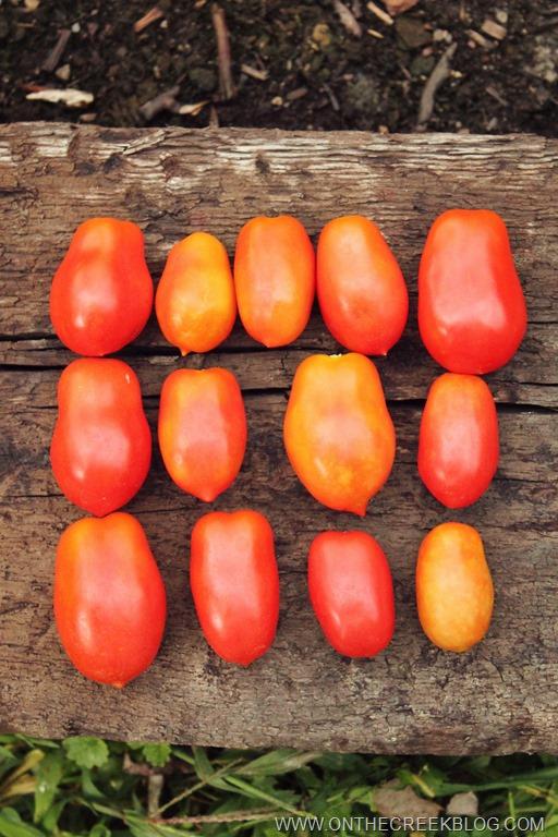 [tomatoharvest4%5B7%5D]
