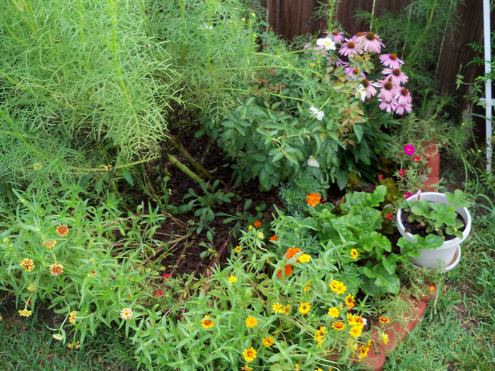Gardening 2010, Part Three - 101_4722.JPG