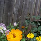 Gardening 2013 - 115_5712.JPG