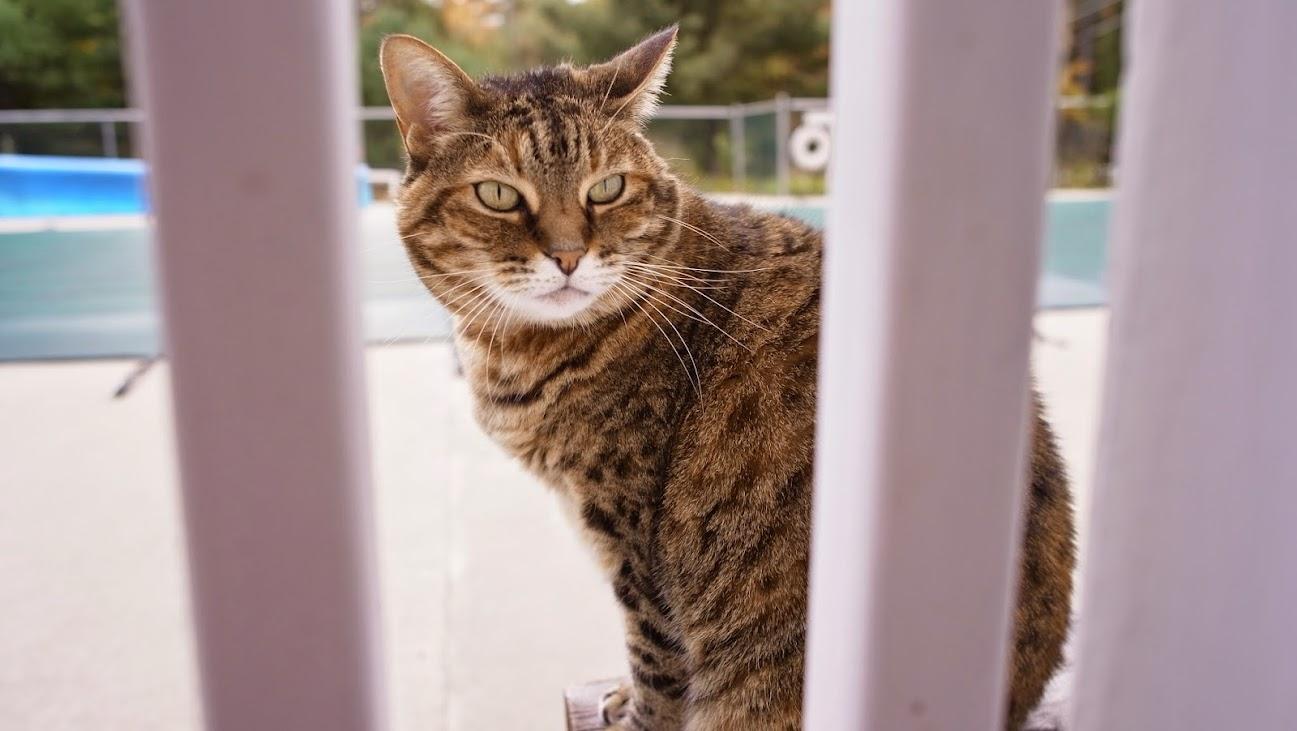 Kitty~~~