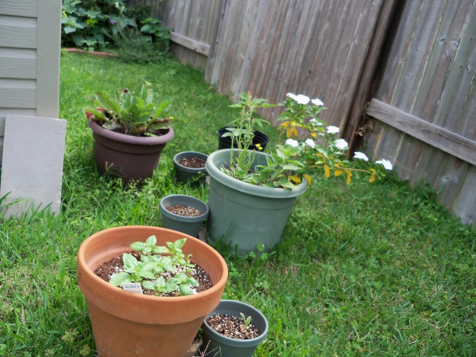 Gardening 2013 - 115_6046.JPG