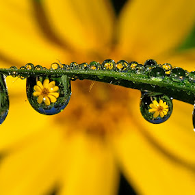 Reflections of Yellow Flower by Petrus Arif - Abstract Water Drops & Splashes