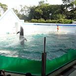 dolphin show in Shinagawa, Tokyo, Japan