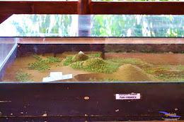 stone garden 18  april 2015 nikon  34