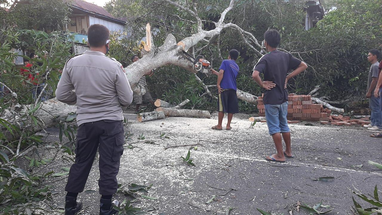 Kapolsek Marioriwawo Polres Soppeng Datangi Tempat Kejadian dan Evakuasi Pohon Tumbang