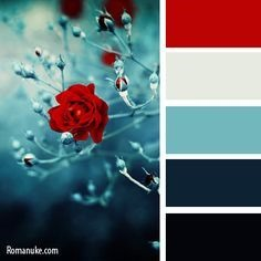Winter navy red color palette