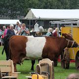 Paard & Erfgoed 2 sept. 2012 (60 van 139)