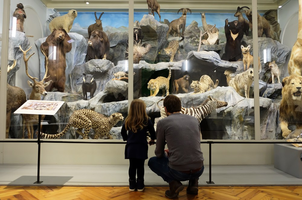 que faire à lille - musée d'histoire naturelle