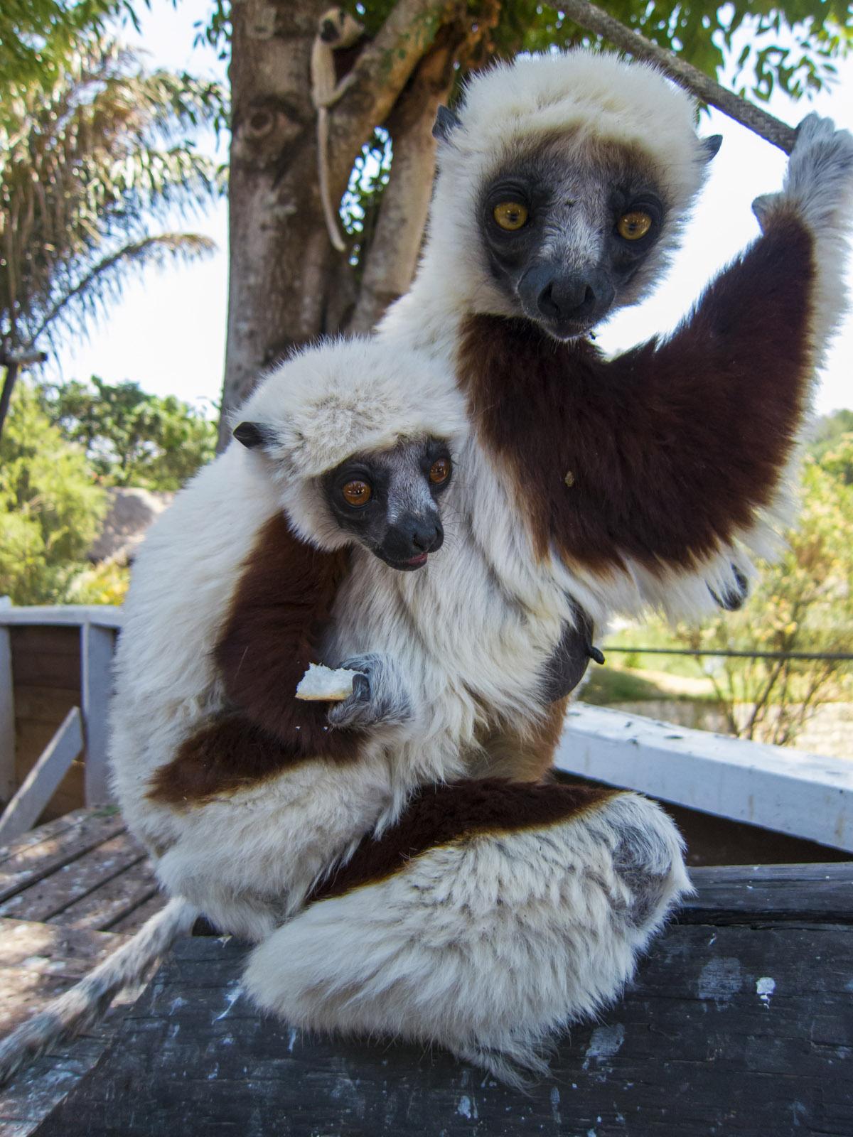 Madagascar9-150.jpg